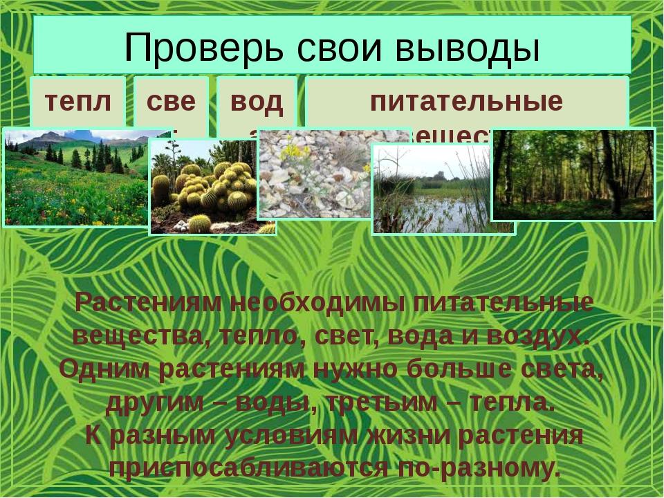 Проверь свои выводы тепло свет вода питательные вещества Растениям необходимы...