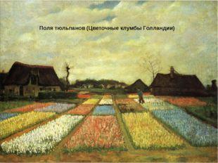 Поля тюльпанов (Цветочные клумбы Голландии)