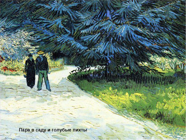 Пара в саду и голубые пихты