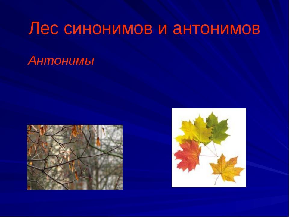 Лес синонимов и антонимов Антонимы