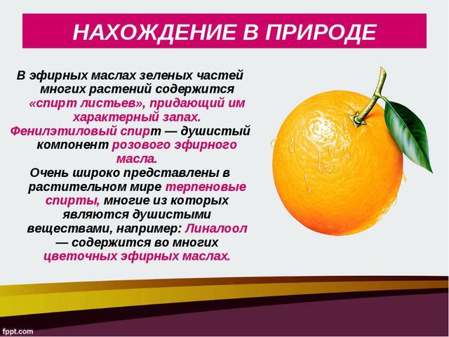 В эфирных маслах зеленых частей многих растений содержится «спирт листьев», п...