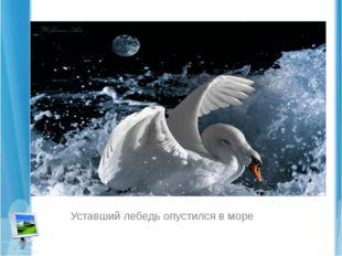 Уставший лебедь опустился в море