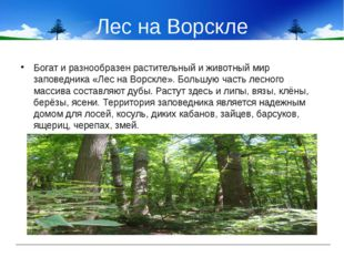 Лес на Ворскле Богат и разнообразен растительный и животный мир заповедника «