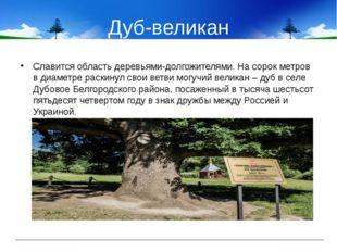 Дуб-великан Славится область деревьями-долгожителями. На сорок метров в диаме