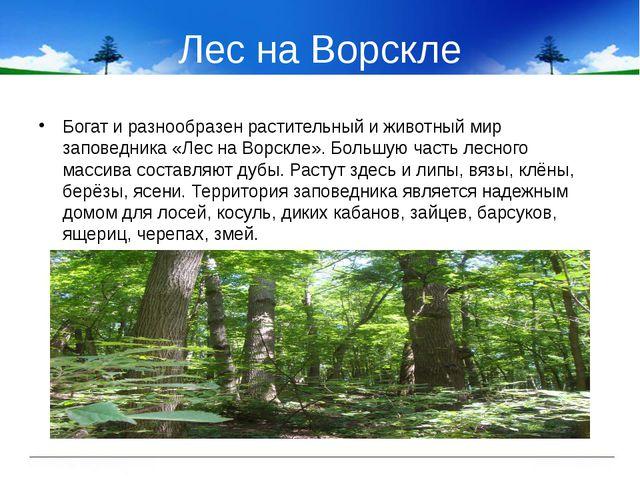 Лес на Ворскле Богат и разнообразен растительный и животный мир заповедника «...