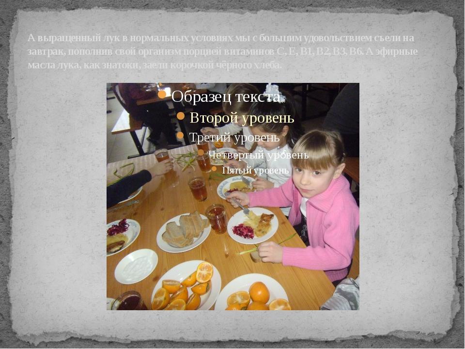 А выращенный лук в нормальных условиях мы с большим удовольствием съели на за...