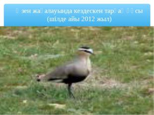Өзен жағалауында кездескен тарғақ құсы (шілде айы 2012 жыл)
