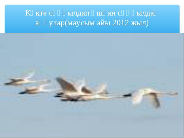 Көкте сұңқылдап ұшқан сұңқылдақ аққулар(маусым айы 2012 жыл)