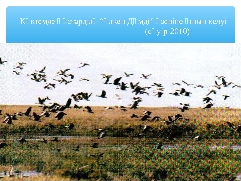 """Көктемде құстардың """"Үлкен Дәмді"""" өзеніне ұшып келуі (сәуір-2010)"""
