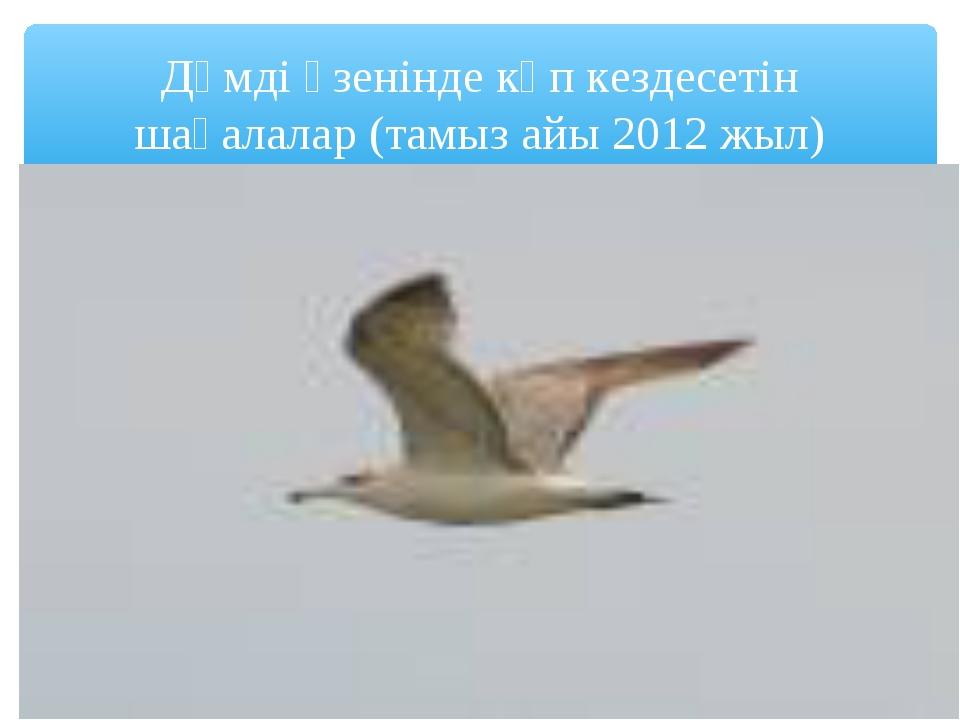 Дәмді өзенінде көп кездесетін шағалалар (тамыз айы 2012 жыл)
