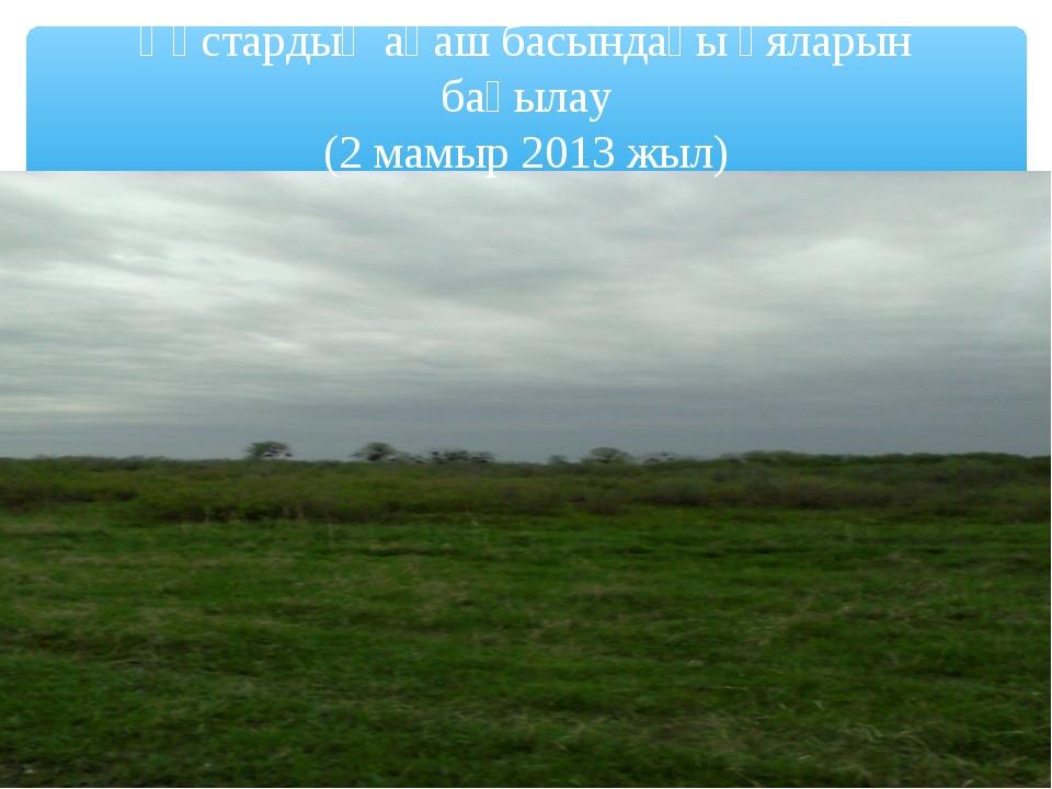 Құстардың ағаш басындағы ұяларын бақылау (2 мамыр 2013 жыл)
