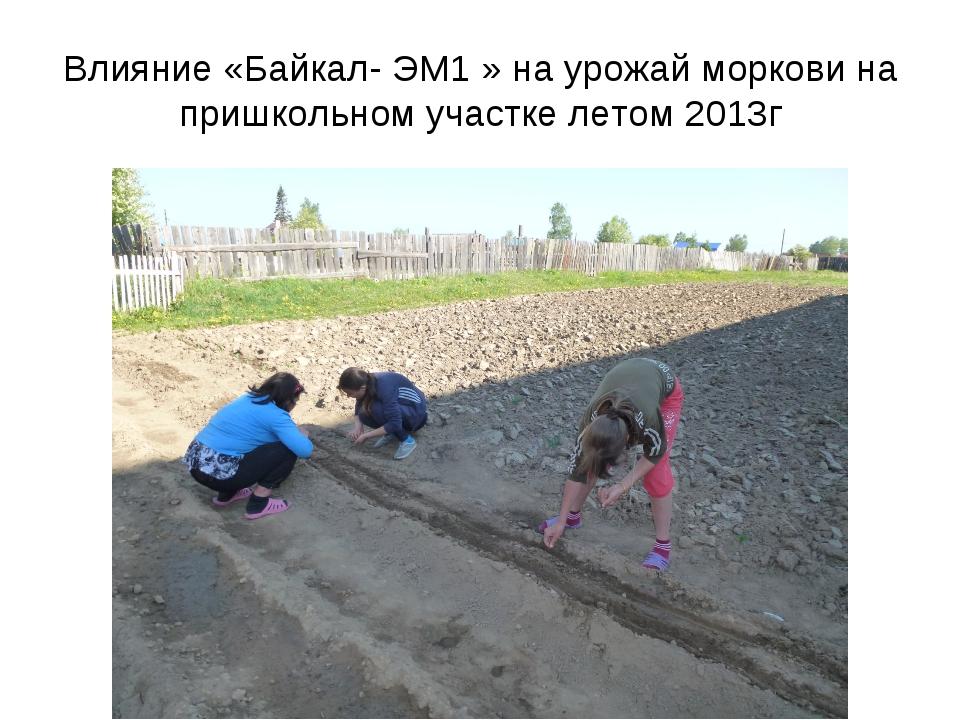 Влияние «Байкал- ЭМ1 » на урожай моркови на пришкольном участке летом 2013г