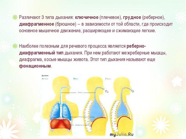 Различают 3 типа дыхания: ключичное (плечевое), грудное (реберное), диафрагме...