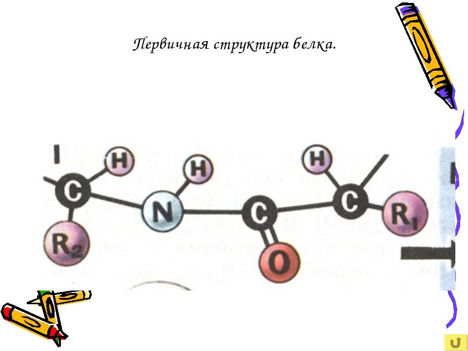 Первичная структура белка.