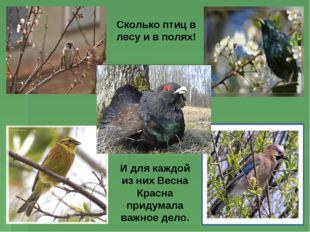 Сколько птиц в лесу и в полях! И для каждой из них Весна Красна придумала важ