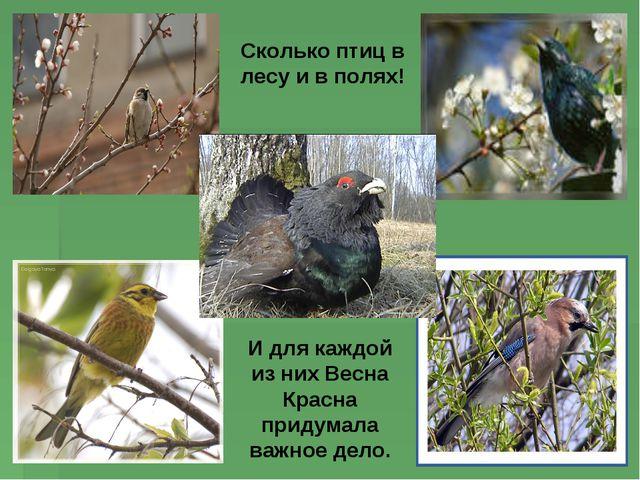Сколько птиц в лесу и в полях! И для каждой из них Весна Красна придумала важ...