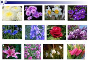 Chrysanthemum Daffodil Aster Violet Cornflower Bluebells Rose Lilac Lily Peon