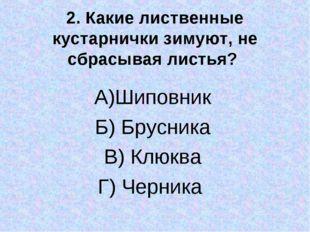 2. Какие лиственные кустарнички зимуют, не сбрасывая листья? А)Шиповник Б) Бр