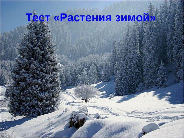 Тест «Растения зимой»