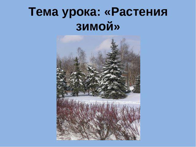 Тема урока: «Растения зимой»