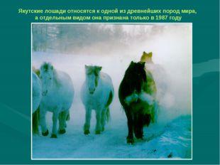Якутские лошади относятся к одной из древнейших пород мира, а отдельным видом