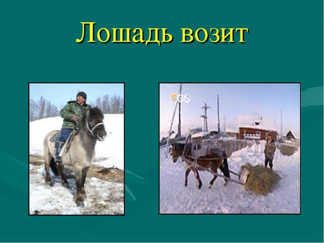 Лошадь возит