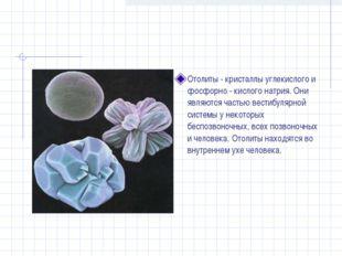 Отолиты - кристаллы углекислого и фосфорно - кислого натрия. Они являются час