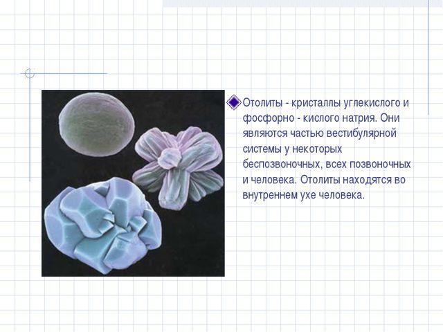 Отолиты - кристаллы углекислого и фосфорно - кислого натрия. Они являются час...