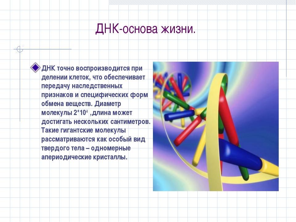 ДНК-основа жизни. ДНК точно воспроизводится при делении клеток, что обеспечив...