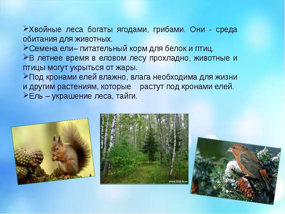 Хвойные леса богаты ягодами, грибами. Они - среда обитания для животных. Семе...