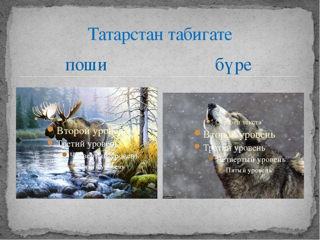 поши Татарстан табигате бүре