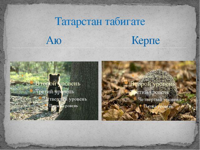 Аю Татарстан табигате Керпе