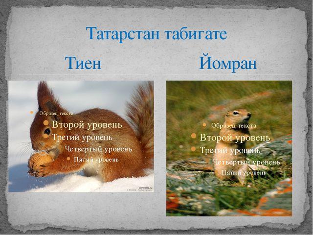 Тиен Татарстан табигате Йомран