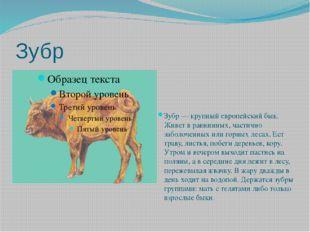 Зубр Зубр — крупный европейский бык. Живет в равнинных, частично заболоченных