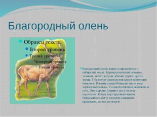Благородный олень Благородный олень живет в европейских и сибирских лесах. Ко