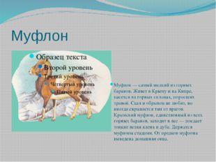 Муфлон Муфлон — самый мелкий из горных баранов. Живет в Крыму и на Кипре, пас