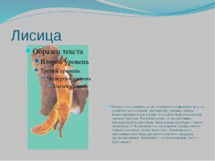 Лисица Лисица хоть и хищница, но не отказывается от фруктов и ягод, а в голод