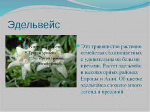 Эдельвейс Это травянистое растение семейства сложноцветных с удивительными бе