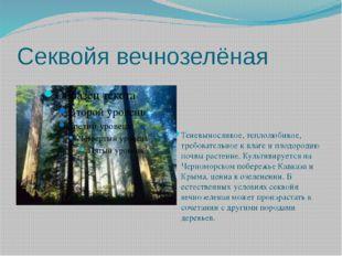 Секвойя вечнозелёная  Теневыносливое, теплолюбивое, требовательное к влаге и
