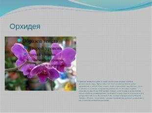 Орхидея Орхидеи являются одним из наиболее богатых видами семейств раститель