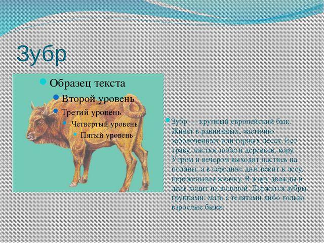 Зубр Зубр — крупный европейский бык. Живет в равнинных, частично заболоченных...