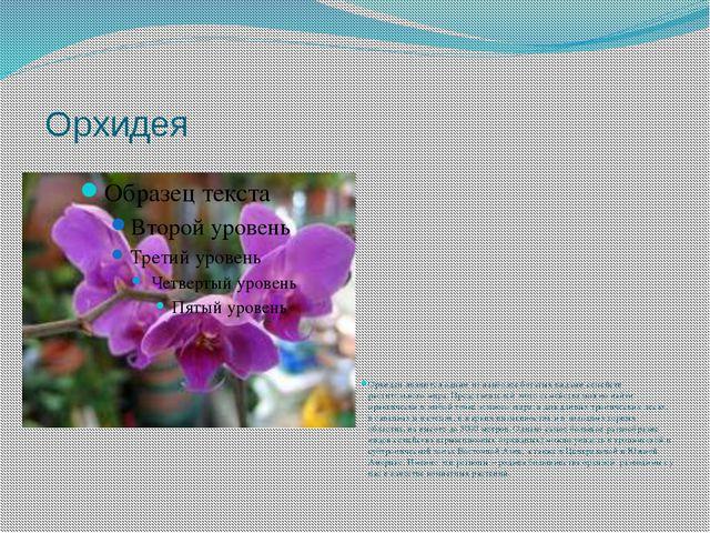 Орхидея Орхидеи являются одним из наиболее богатых видами семейств раститель...