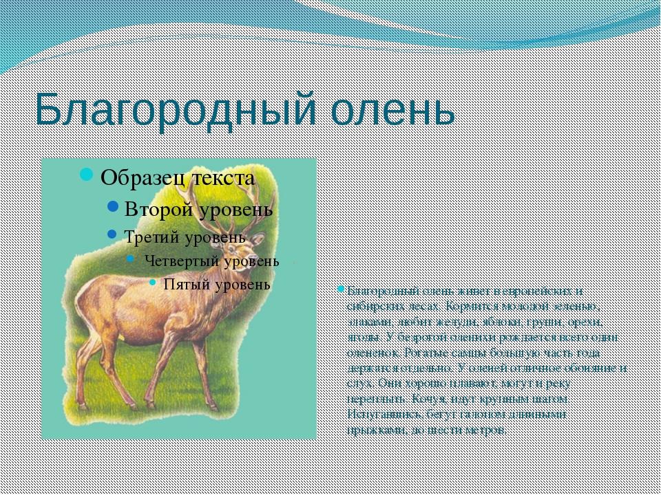 Благородный олень Благородный олень живет в европейских и сибирских лесах. Ко...