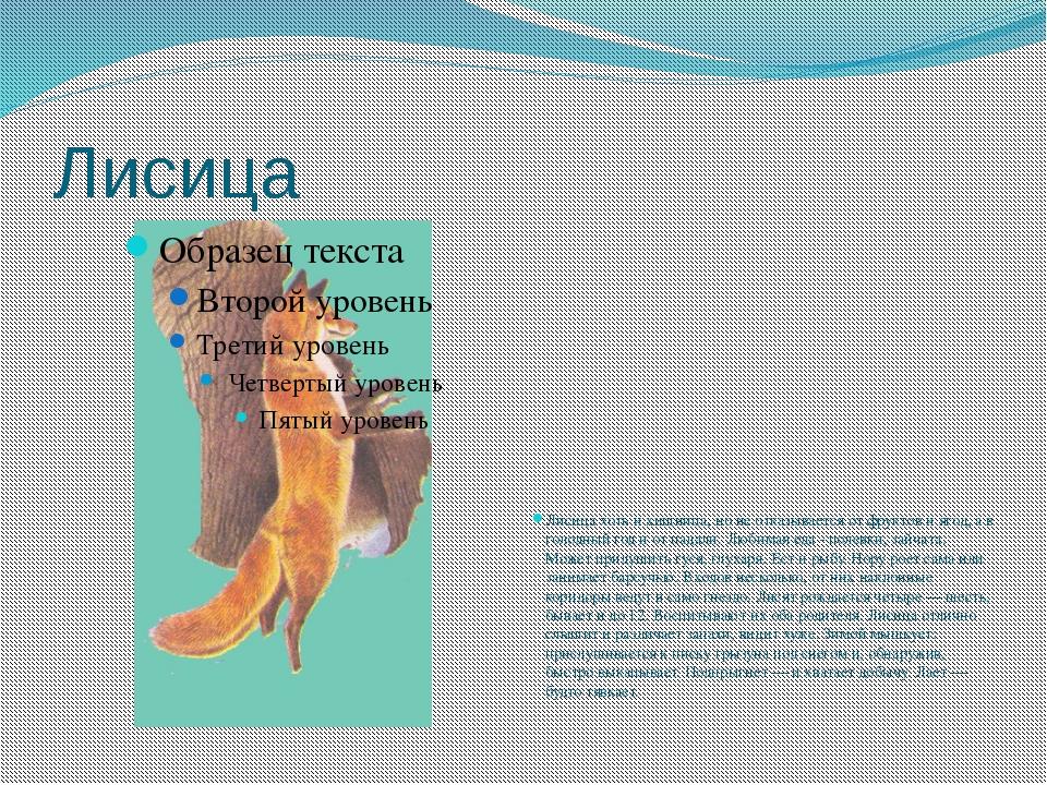 Лисица Лисица хоть и хищница, но не отказывается от фруктов и ягод, а в голод...