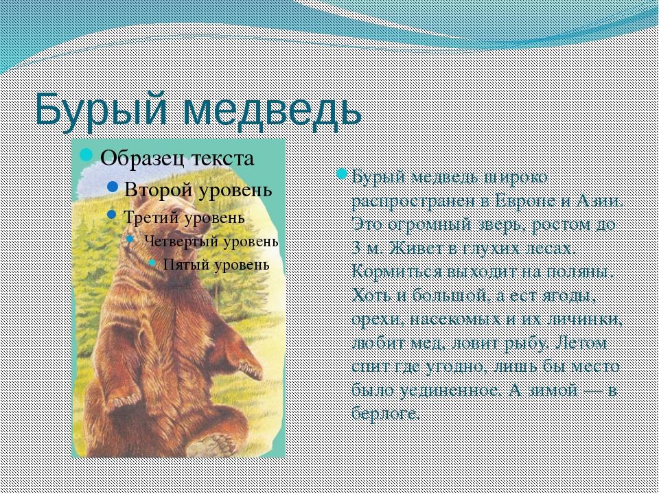 Бурый медведь Бурый медведь широко распространен в Европе и Азии. Это огромны...