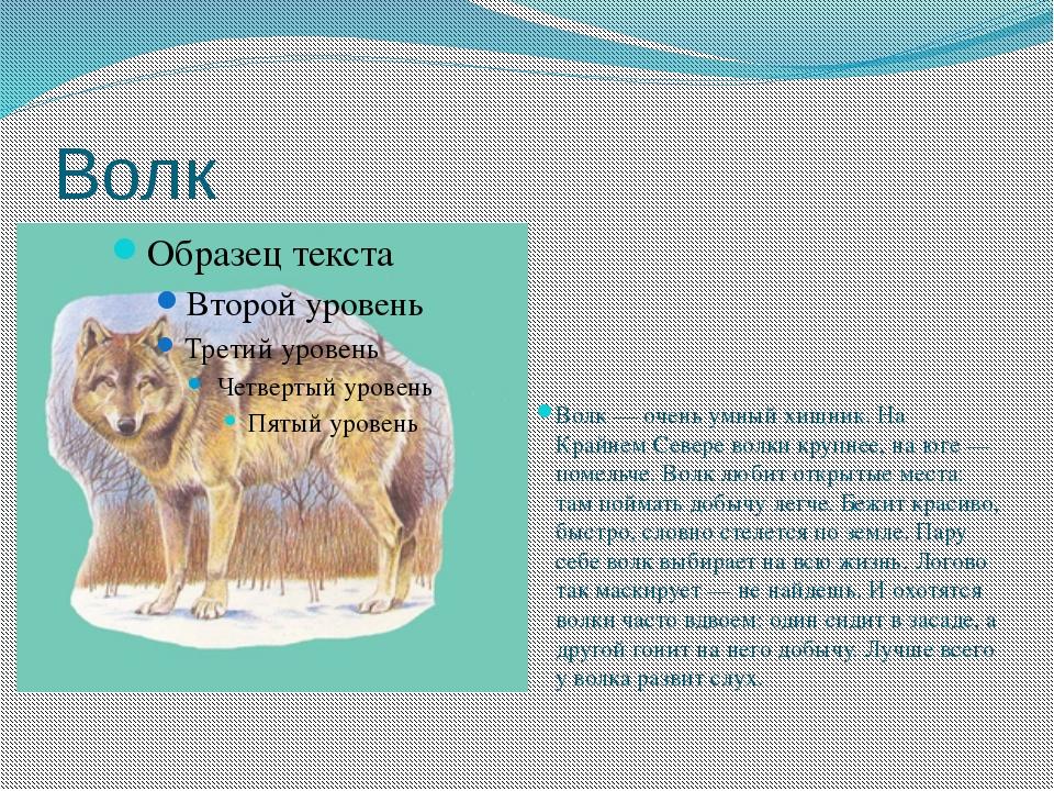 Волк Волк — очень умный хищник. На Крайнем Севере волки крупнее, на юге — пом...