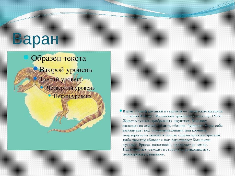Варан Варан. Самый крупный из варанов — гигантская ящерица с острова Комодо (...