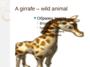 A girrafe – wild animal