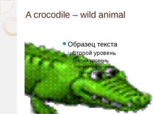A crocodile – wild animal