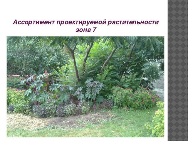 Ассортимент проектируемой растительности зона 7